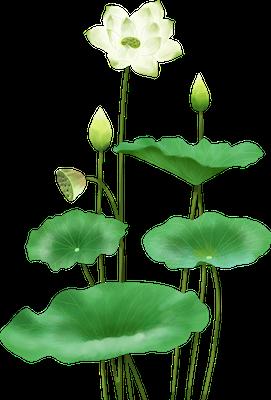 Lotus sticker messages sticker-7