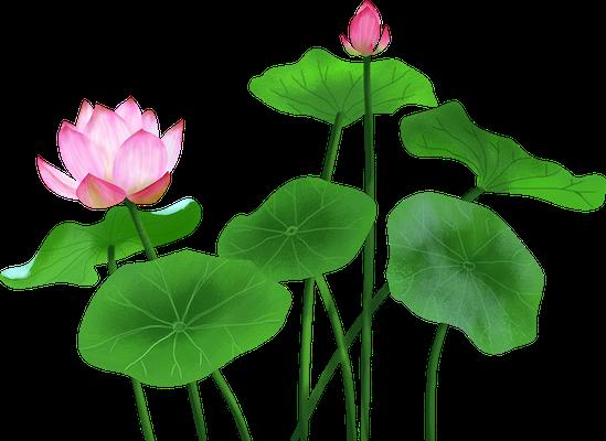 Lotus sticker messages sticker-3