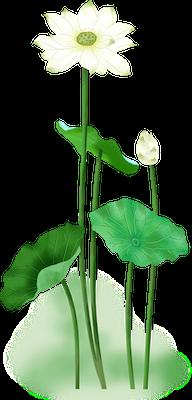Lotus sticker messages sticker-6