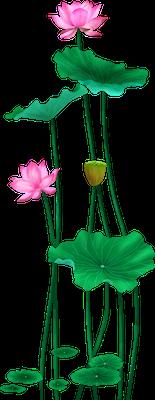 Lotus sticker messages sticker-5