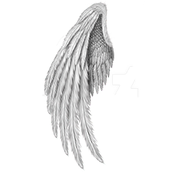 Wings-stickers messages sticker-11