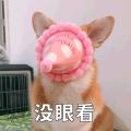 贱萌的柯基表情 messages sticker-11
