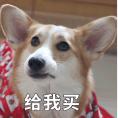 贱萌的柯基表情 messages sticker-7