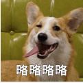 贱萌的柯基表情 messages sticker-10