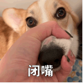 贱萌的柯基表情 messages sticker-2