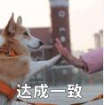 贱萌的柯基表情 messages sticker-5