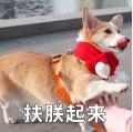 贱萌的柯基表情 messages sticker-6