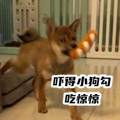 胡麻柴犬 messages sticker-8