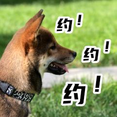 胡麻柴犬 messages sticker-9
