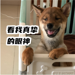 胡麻柴犬 messages sticker-1