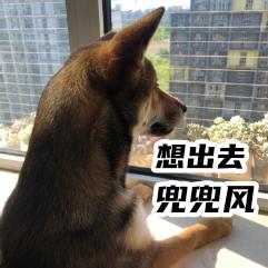 胡麻柴犬 messages sticker-3