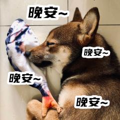 胡麻柴犬 messages sticker-11