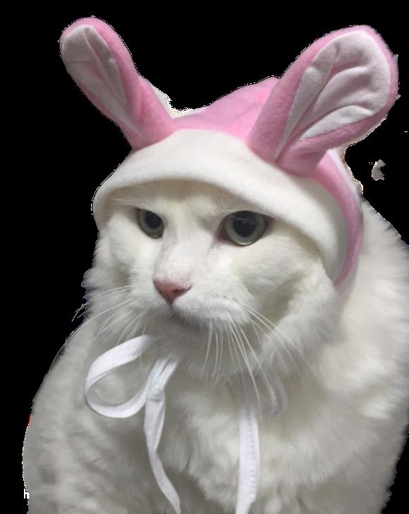 White Cat Stickers messages sticker-9