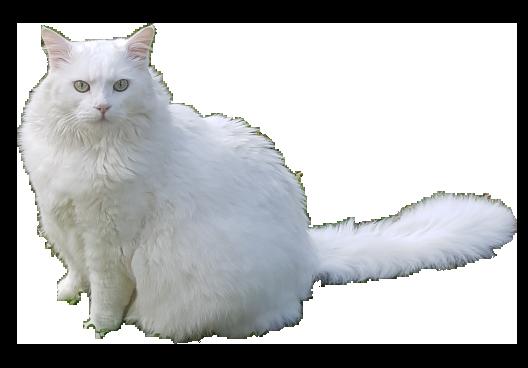 White Cat Stickers messages sticker-6