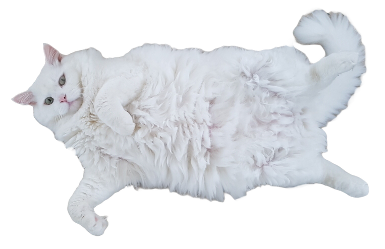 White Cat Stickers messages sticker-0