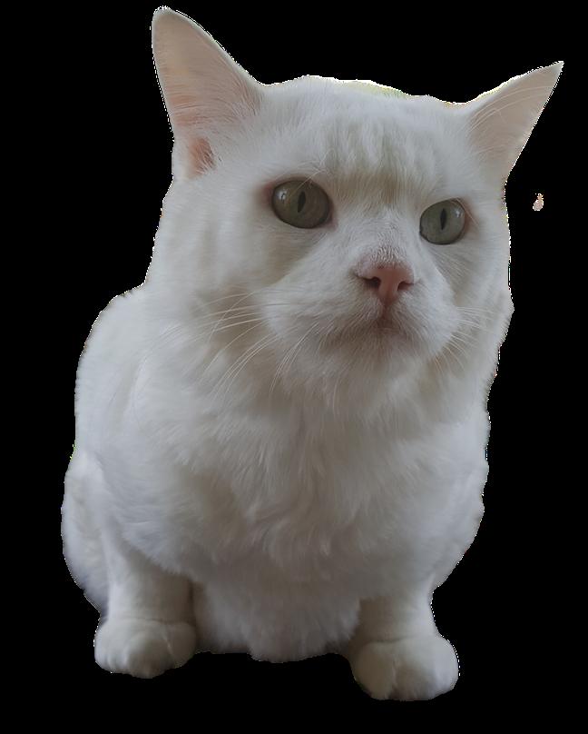 White Cat Stickers messages sticker-10