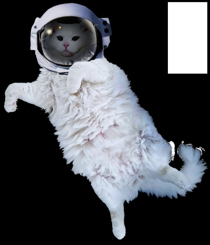 White Cat Stickers messages sticker-5