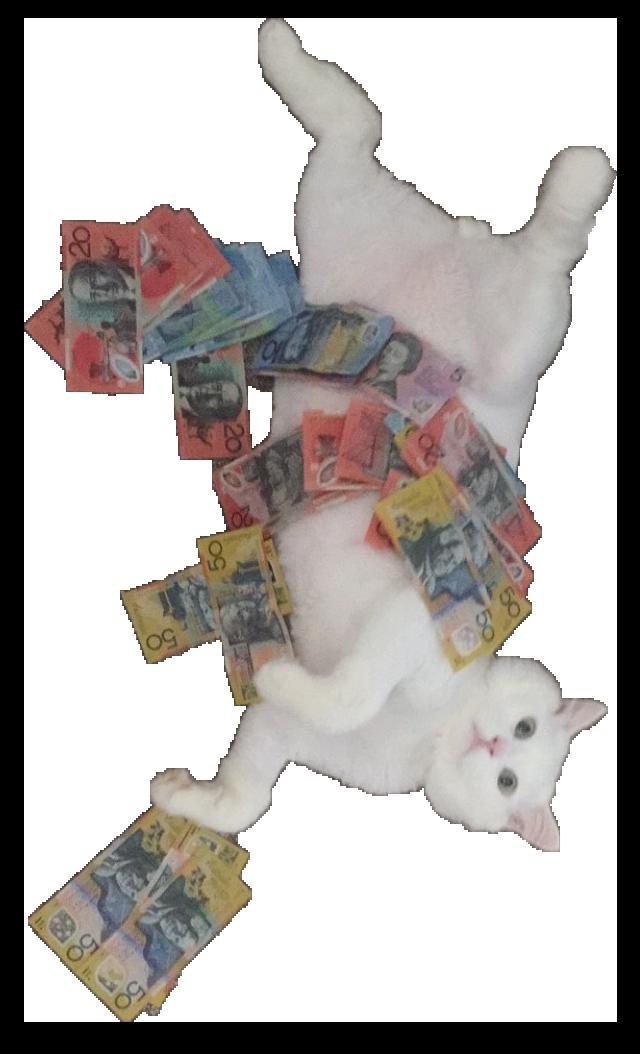 White Cat Stickers messages sticker-1