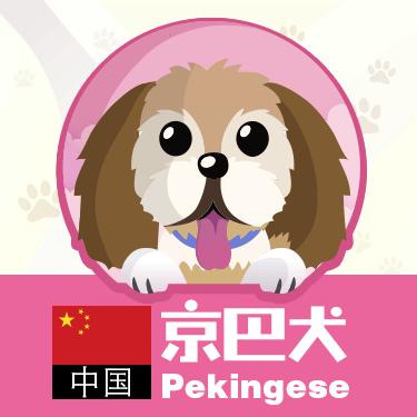 狗狗类型图-贴纸 messages sticker-5