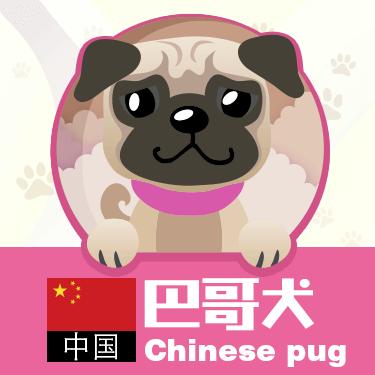 狗狗类型图-贴纸 messages sticker-6