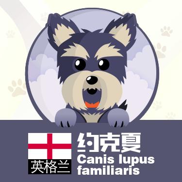 狗狗类型图-贴纸 messages sticker-4