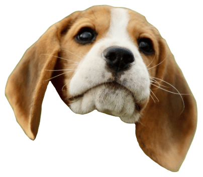 Beagle Quest messages sticker-9