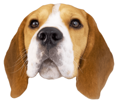 Beagle Quest messages sticker-1