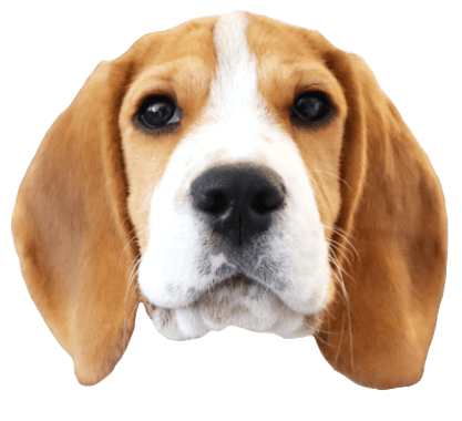Beagle Quest messages sticker-3