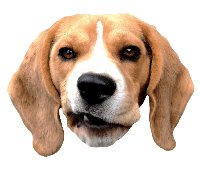 Beagle Quest messages sticker-4