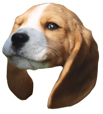Beagle Quest messages sticker-11