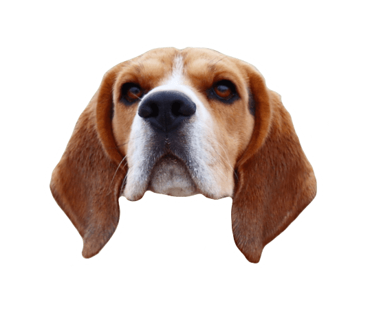 Beagle Quest messages sticker-10