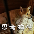 柴犬小鸡腿 messages sticker-4