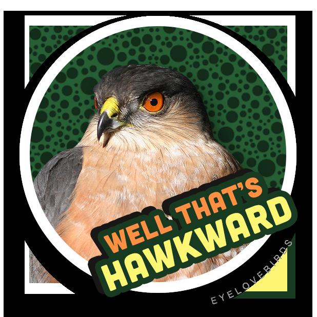 EyeLoveBirds: Bird sightings messages sticker-4