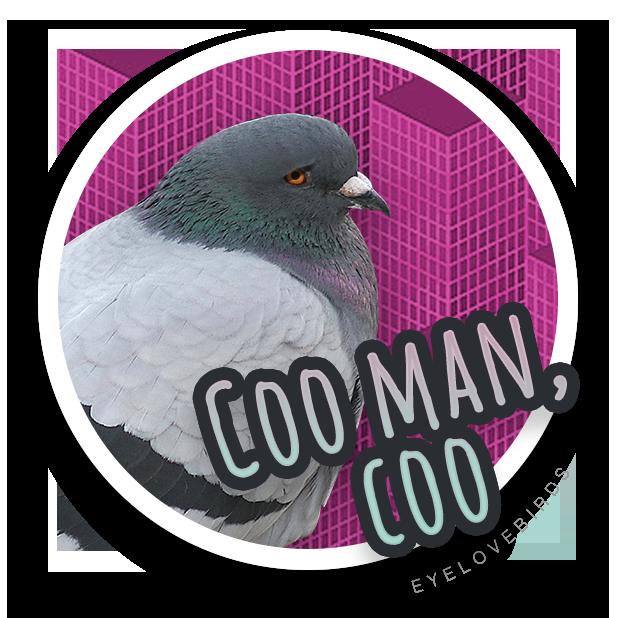 EyeLoveBirds: Bird sightings messages sticker-0