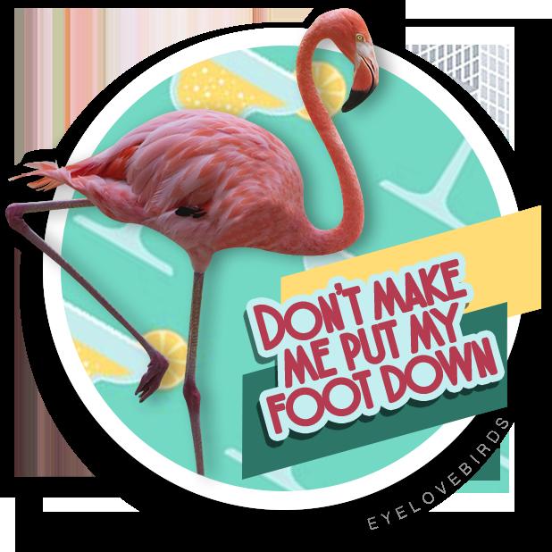 EyeLoveBirds: Bird sightings messages sticker-10