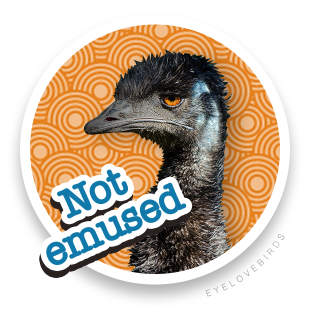 EyeLoveBirds: Bird sightings messages sticker-3