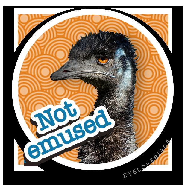EyeLoveBirds: Bird Checklists messages sticker-3